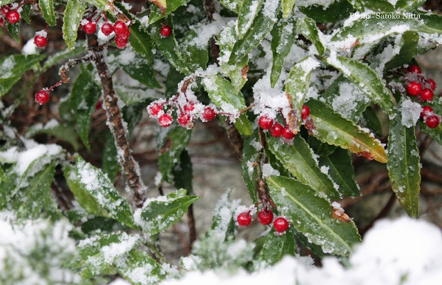 コラム201712雪の庭.jpg
