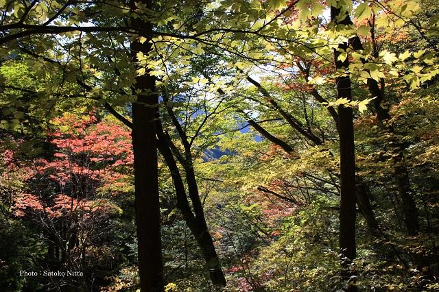 sc1711紅葉の森640.jpg